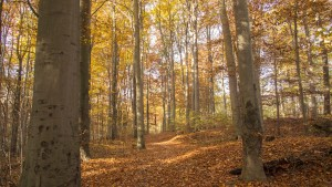 Herbstwald - Naturerleben