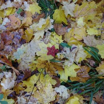 Blätterbunt und Sternenglanz